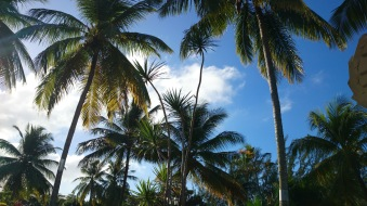 """""""20 years of microRNA Research Meeting"""" Barbados 2014"""
